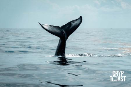 Une whale inconnue a transféré 40 000 BTC entre des adresses Bech32