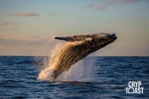 Une whale transfère 1 milliard de dollars en Bitcoin vers un wallet inconnu