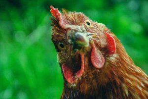 Les œufs Matines intègrent la blockchain IBM Food Trust