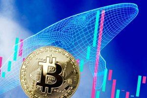 Analyse: que révèle le nombre de whales sur le prix futur du Bitcoin (BTC)?