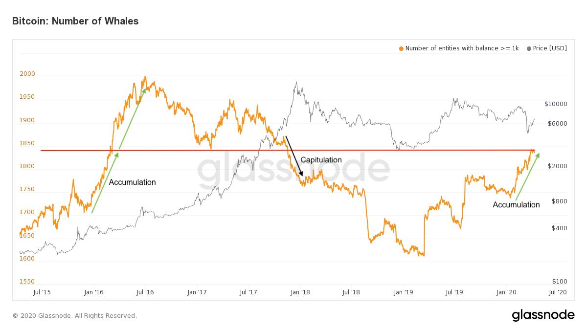 Whales nombre Bitcoin BTC prix