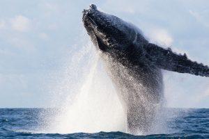 Une whale Bitcoin transfère $634M pour seulement 0,26$ de frais