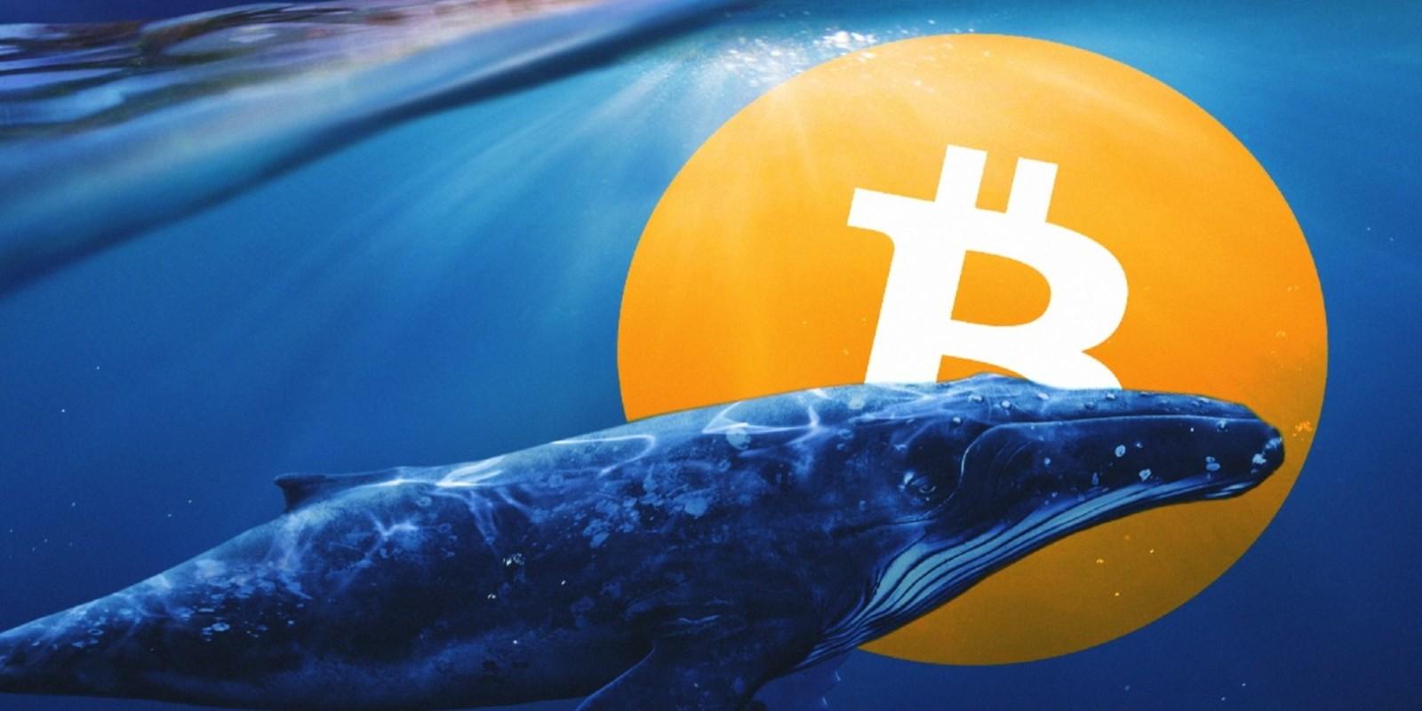 Une baleine Bitcoin transfère 245 175 BTC en 1 heure
