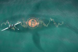 Une whale déplace 1.3 milliard de dollars en BTC pour moins de 2$