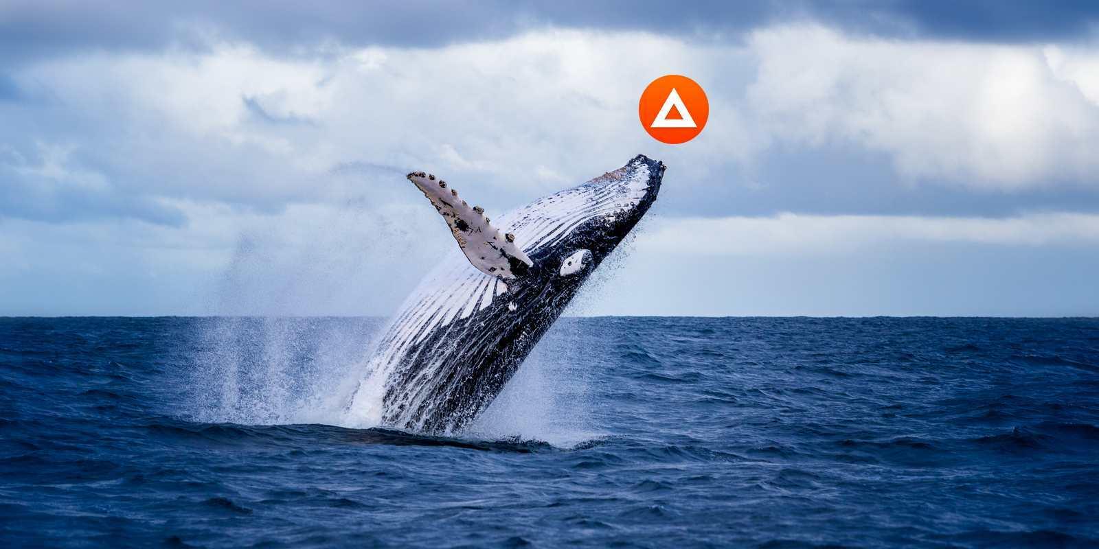 Les whales accumulent du Basic Attention Token (BAT): quelles conséquences sur le prix?