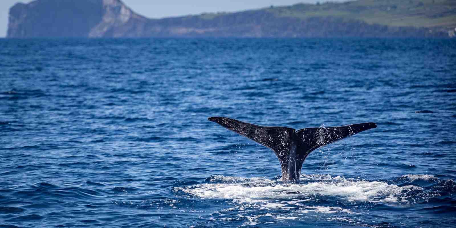 Bitcoin(BTC) : les «petits» investisseurs volent de l'influence aux whales