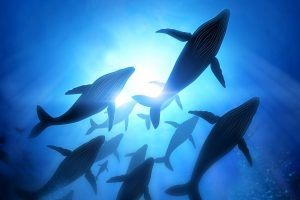 Ether (ETH) : la chute du cours attire les whales