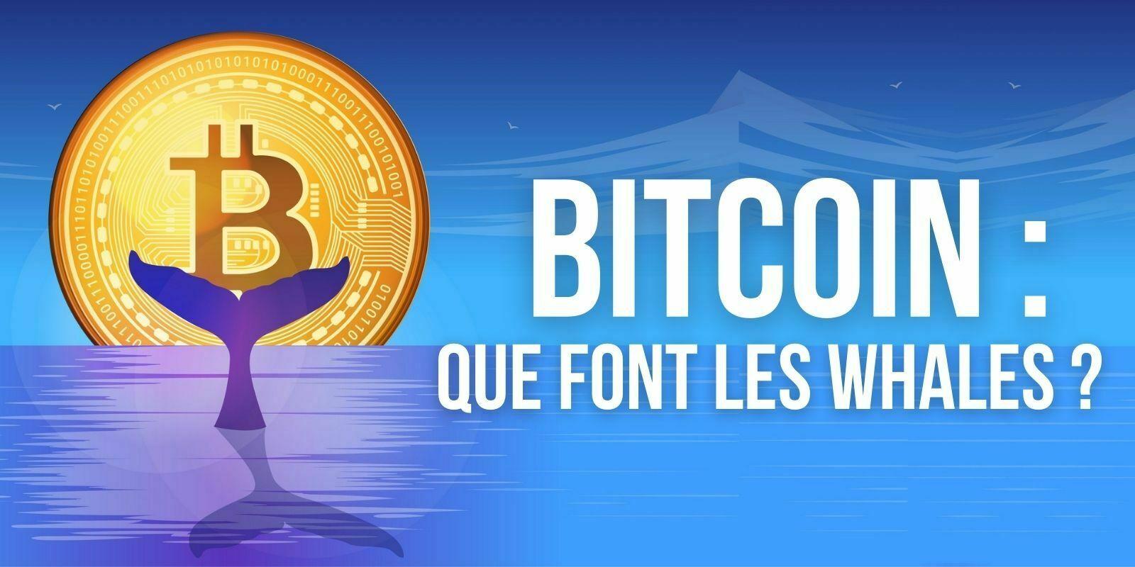 Bitcoin (BTC) — Pourquoi les whales ont-elles accumulé pendant le krach?