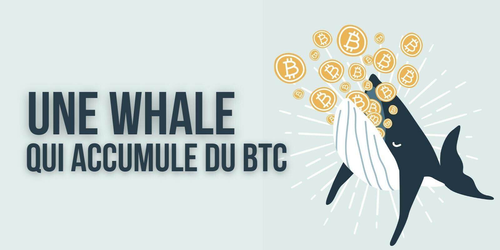 La 3e plus grosse whale en Bitcoin profite du dip pour acheter 23 millions de dollars de BTC