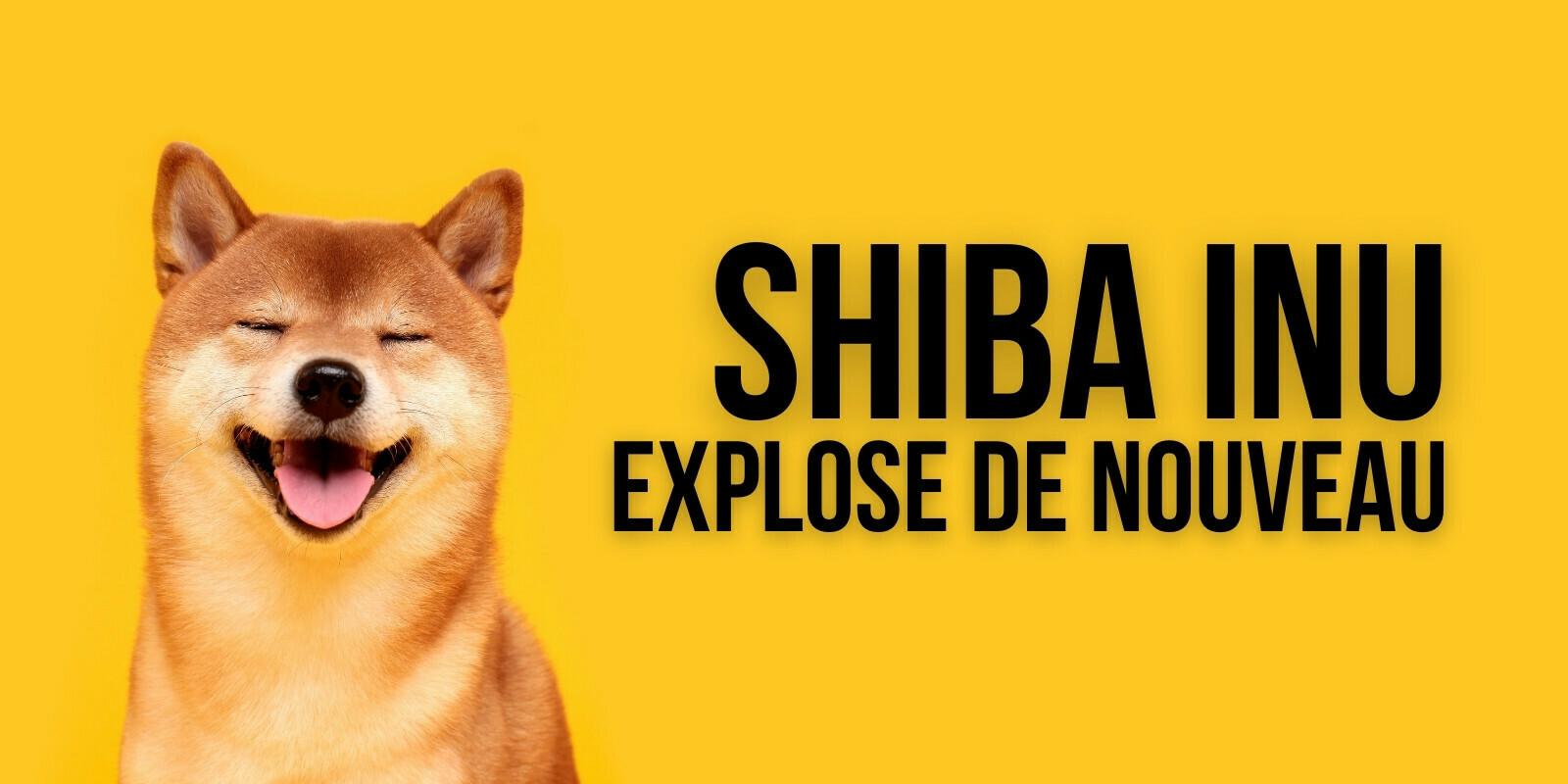 Le cours du Shiba Inu (SHIB) explose de nouveau : +214% sur la semaine
